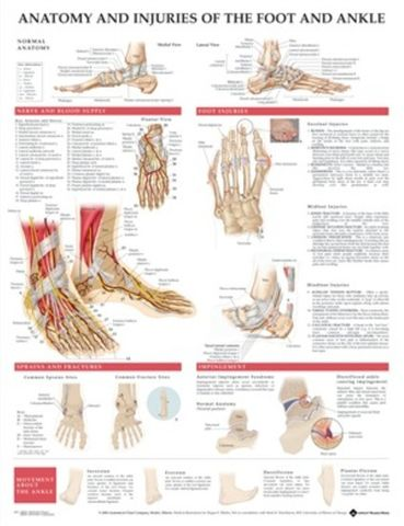 Chart Foot & Ankle