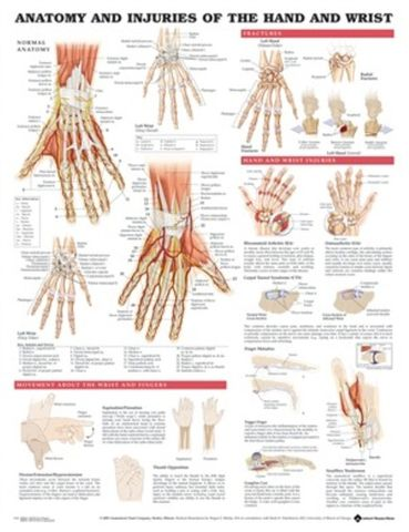 Chart Hand & Wrist