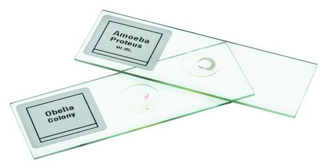 Microscope slides set 3 Introductory