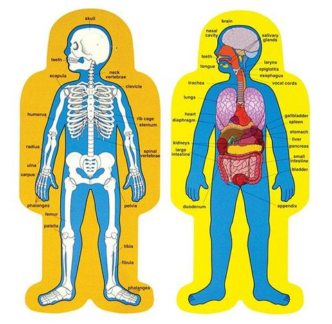 Child size human body