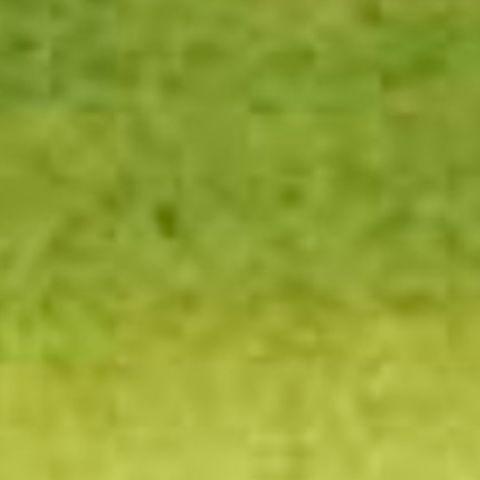 Olive Green 813