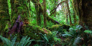 Amazon Rainforest 3 Sizes