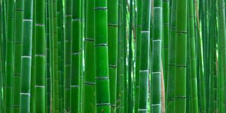 Bamboo Forest 3 Sizes