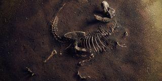 Jurassic Bones 3 Sizes