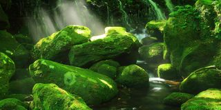 Moss Forest 3 Sizes