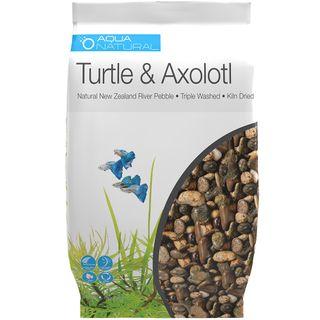 Turtle & Axolotl
