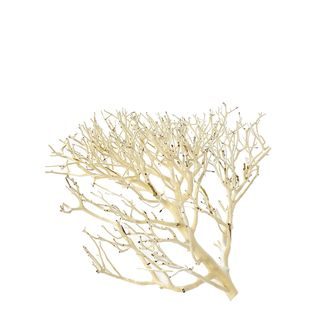 Coral Wood Medium 22-30cm