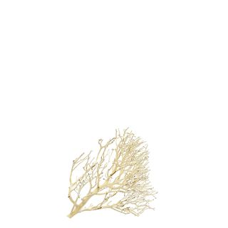 Coral Wood Nano 10-15cm
