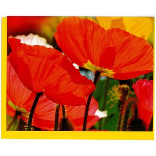 GIFT CARD 25 RED & YELLOW POPPIES 90mm x 70mm (MIN BUY 10)