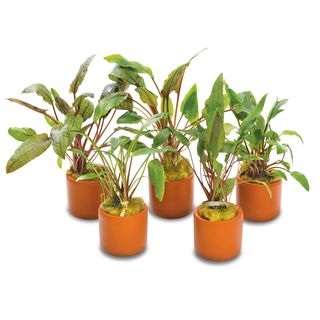 5 PACK ASSORTED CRYPTS 3CM T-COTTA POTS