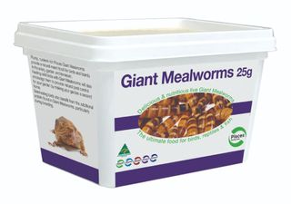 GIANT MEALWORMS - 25G TUB
