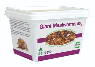GIANT MEALWORMS - 50G TUB