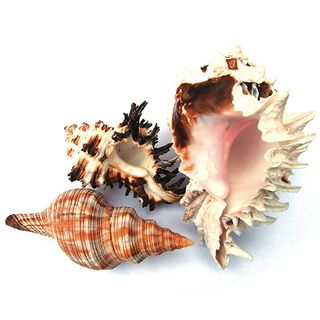HERMIT CRAB SPARE SHELLS - SMALL