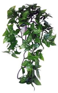KOM PHILODENDRON HANGING PLANT 30CM