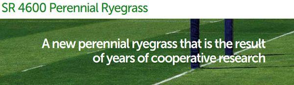 SR4600 Perennial Ryegrass
