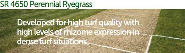 SR4650 Perennial Ryegrass