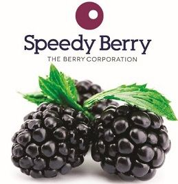 BLACKBERRIES FROZEN 1KG SPEEDYBERRY