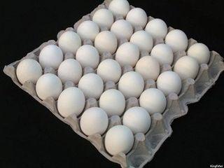 Eggs Large 600G 15 Dozen