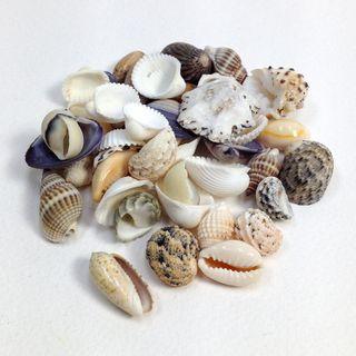Seashells Assorted Shapes/Sizes 45g