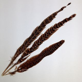 Craft Feathers Black/Brown Stripe Pkt 3