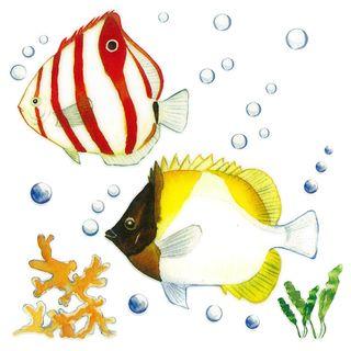 Dec/Transfers Red/Yellow Fish