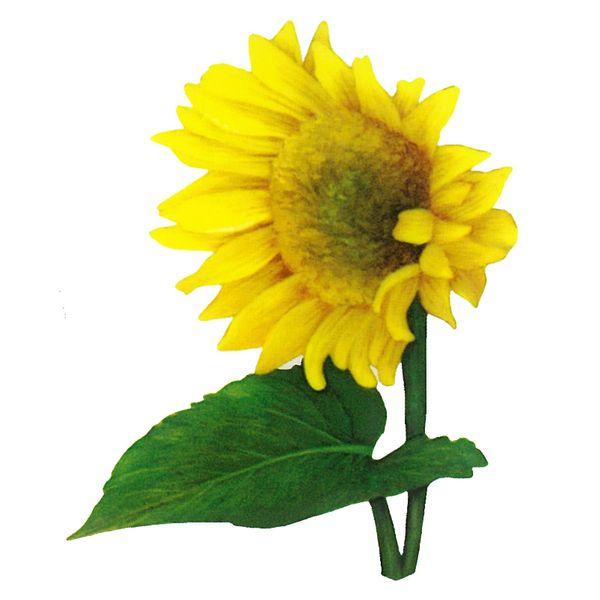 Dec/Transfers Sunflower