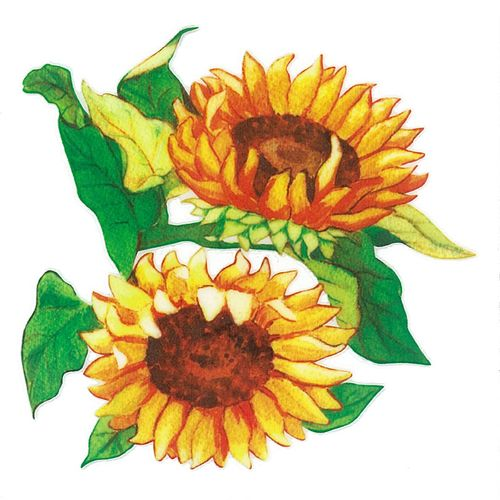 Dec/Transfers Sunflowers