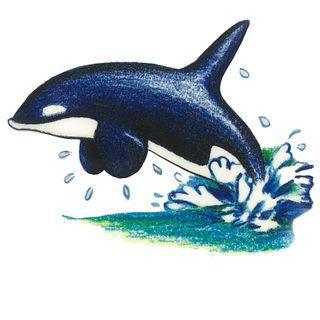 Dec/Transfers Orca