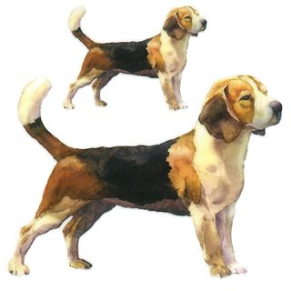 Dec/Transfers Dogs