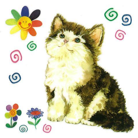 Dec/Transfers Kitten
