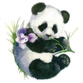 Dec/Transfers Panda