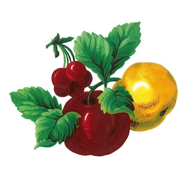 Dec/Transfers Fruit