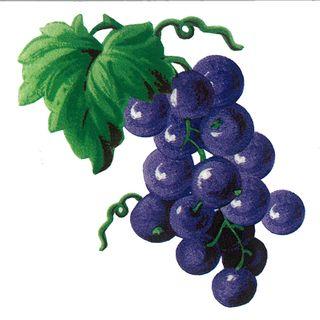Dec/Transfers Grapes