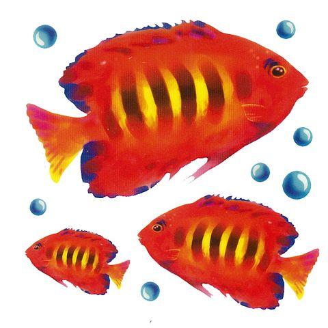 Dec/Transfers Orange Fish