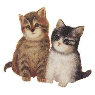 Dec/Transfers 2 Kittens