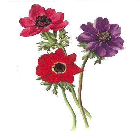 Dec/Transfers 3 Flowers