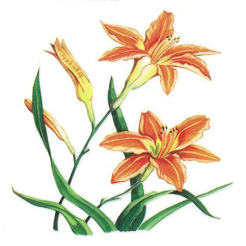 Dec/Transfers Orange Flowers