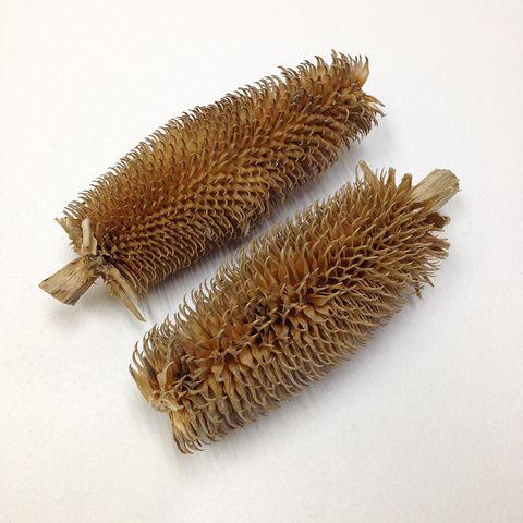 Brush Cones Assorted Pkt 2