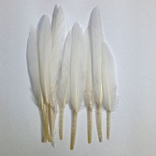 Craft Feathers White Pkt 12