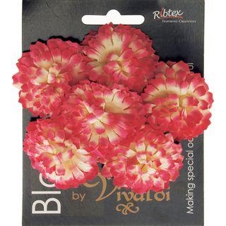Carnation 6H Variegated Pink 1Bch