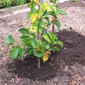 Plant below surface