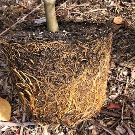 assess root structure