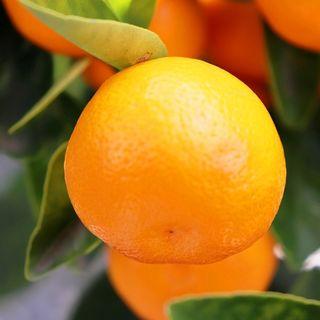 Citrus & Edibles