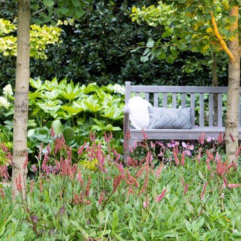 Persicaria affinis 'Dimity'