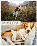 From Hunter to Lover