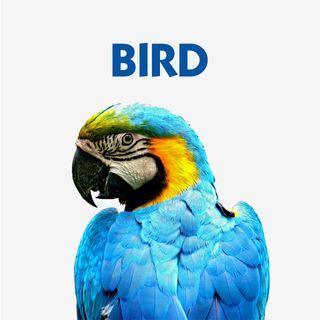 BIRD & POULTRY