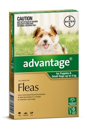 ADVANTAGE SMALL DOG 0-4KG 6PACK