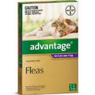 ADVANTAGE LARGE CAT OVER 4KG 1PK