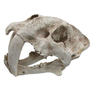 ULTIMATE REPTILE SUPPLIERS SABRE TOOTH SKULL