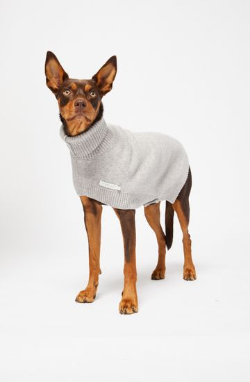 BUDDY DOG JUMPER